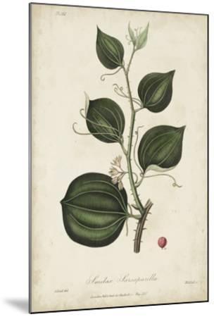 Medicinal Botany I-Churchill-Mounted Giclee Print