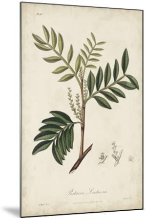 Medicinal Botany II-Churchill-Mounted Giclee Print
