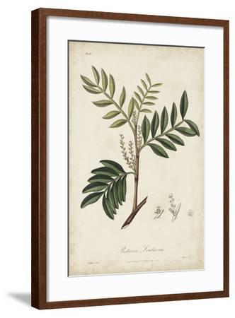 Medicinal Botany II-Churchill-Framed Giclee Print