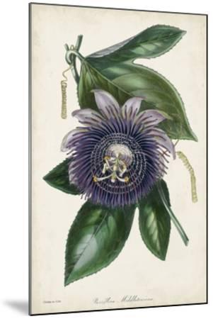 Plum Passion Flower-Paxton-Mounted Giclee Print