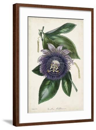 Plum Passion Flower-Paxton-Framed Giclee Print