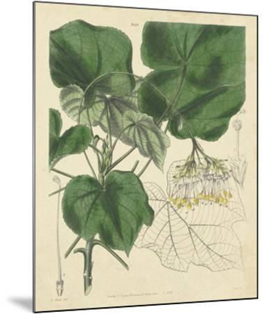 Curtis Leaves & Blooms I-Curtis-Mounted Giclee Print