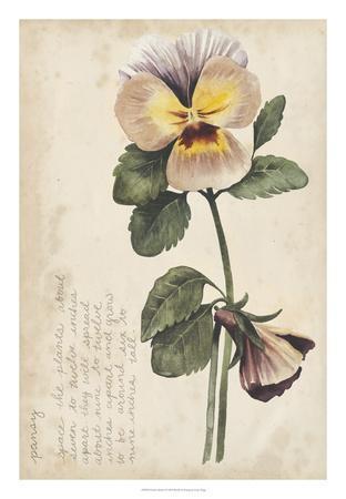 Garden Studies I-Grace Popp-Framed Giclee Print
