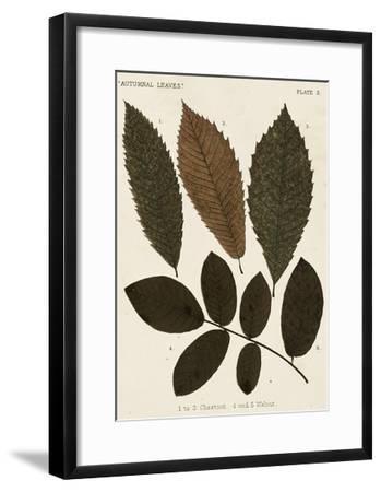 Autumnal Leaves I-Vision Studio-Framed Giclee Print