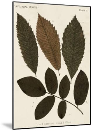 Autumnal Leaves I-Vision Studio-Mounted Giclee Print