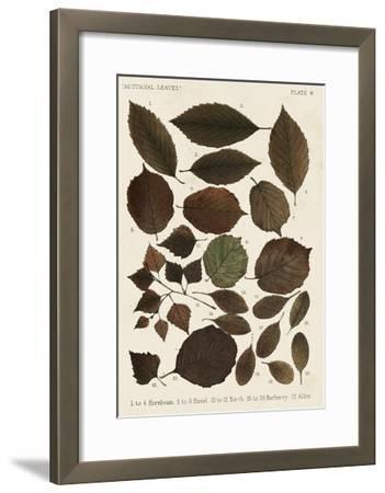 Autumnal Leaves VI-Vision Studio-Framed Giclee Print