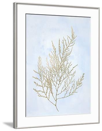 Gold Foil Algae II on Blue-Jennifer Goldberger-Framed Art Print