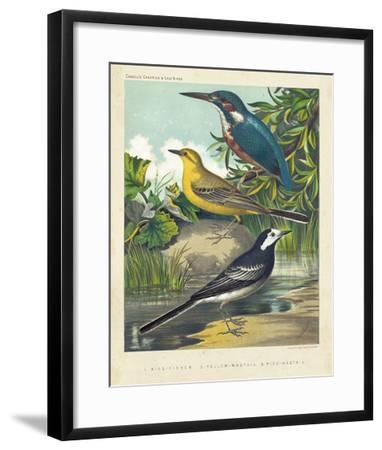 King-fisher & Wagtails-Cassell-Framed Giclee Print