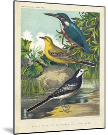 King-fisher & Wagtails-Cassell-Mounted Giclee Print