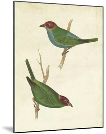Peruvian Tanager II-Cassin-Mounted Giclee Print