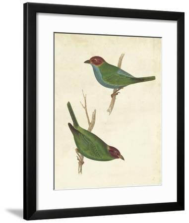 Peruvian Tanager II-Cassin-Framed Giclee Print