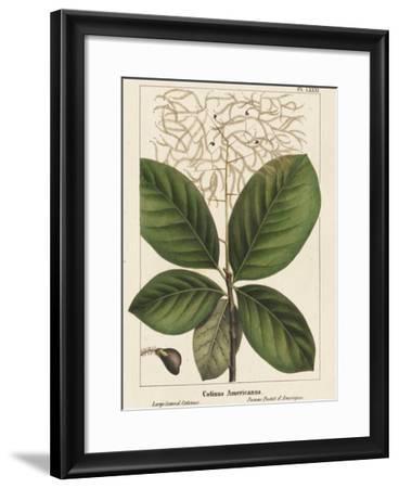 Large Leaved Cotinus-John Silva-Framed Giclee Print