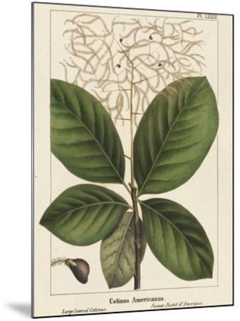 Large Leaved Cotinus-John Silva-Mounted Giclee Print