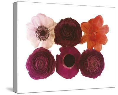 Colour Cluster I-Katja Marzahn-Stretched Canvas Print