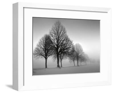Winter Trees III-Ilona Wellmann-Framed Art Print