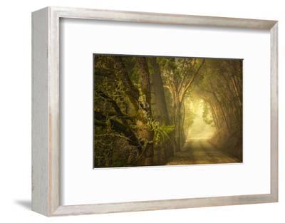 Dream's Journey-David Lorenz Winston-Framed Art Print