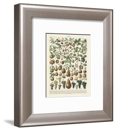 Fruits II-Adolphe Millot-Framed Art Print