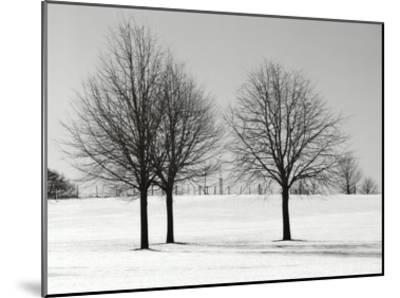 Silhouettes Of Winter I-Ilona Wellmann-Mounted Art Print