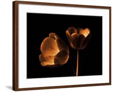 Tulip Duo-Ilona Wellmann-Framed Art Print