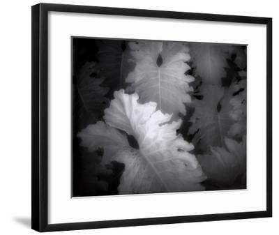 Flora Exotica IX-John Kasinger-Framed Art Print