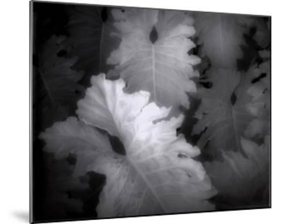 Flora Exotica IX-John Kasinger-Mounted Art Print