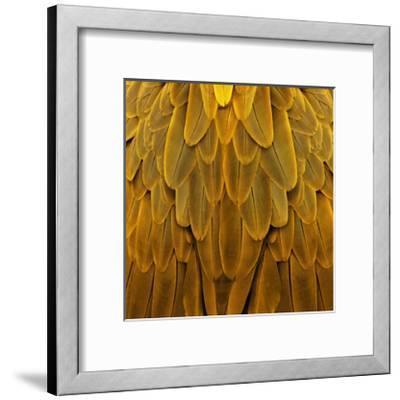 Feathered Friend - Golden-Julia Bosco-Framed Giclee Print