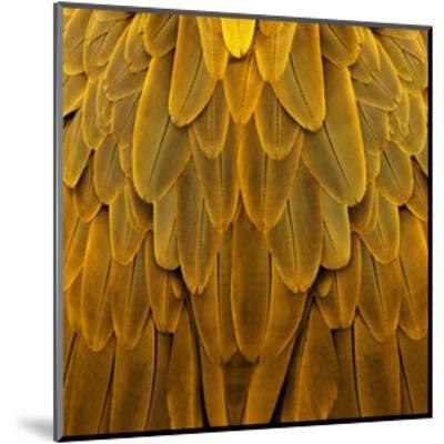 Feathered Friend - Golden-Julia Bosco-Mounted Giclee Print