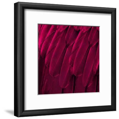 Feathered Friend - Magenta-Julia Bosco-Framed Giclee Print