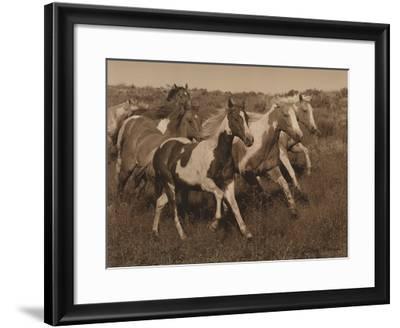 Horses Running II-Robert Dawson-Framed Art Print
