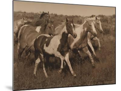 Horses Running II-Robert Dawson-Mounted Art Print