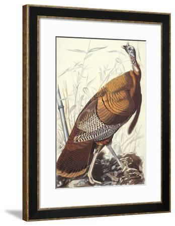 Wild Turkey-John James Audubon-Framed Art Print