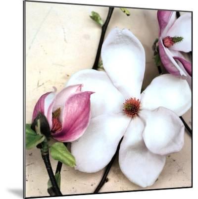 Magnolia Diva I-Heather Johnston-Mounted Art Print