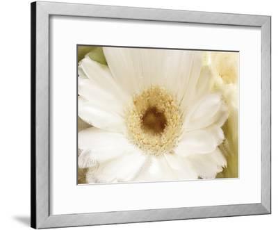 In Bloom-Kimberly Allen-Framed Art Print