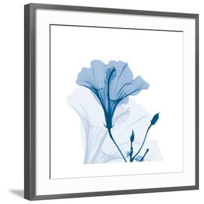 Hibiscus Chiller-Albert Koetsier-Framed Art Print