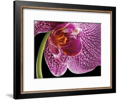 Purple Orchid 2-Barry Seidman-Framed Art Print