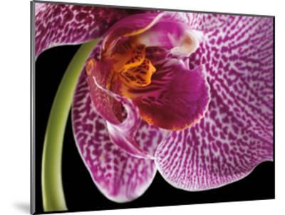 Purple Orchid 2-Barry Seidman-Mounted Art Print
