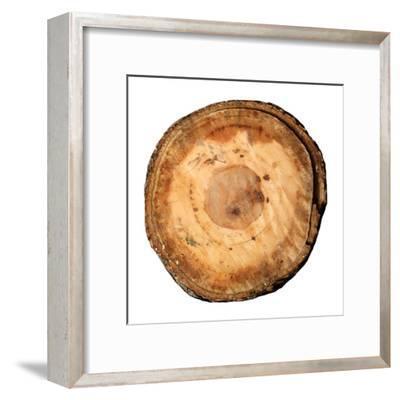 Earthy Rings Of Ages-Sheldon Lewis-Framed Art Print