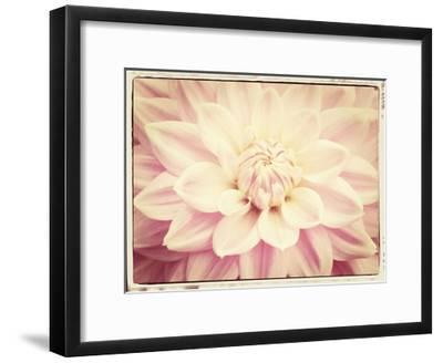 Pink Dahlia 6A Vintage-Suzanne Foschino-Framed Art Print