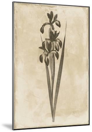 Floral Earthtone Two-Jace Grey-Mounted Art Print
