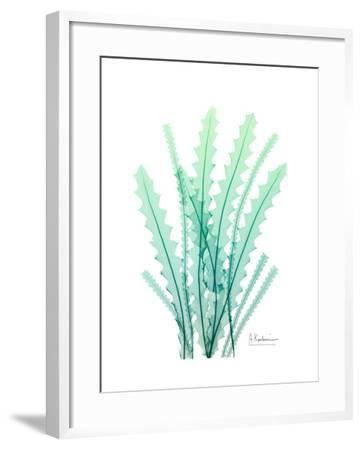 Radiant Banksia-Albert Koetsier-Framed Art Print