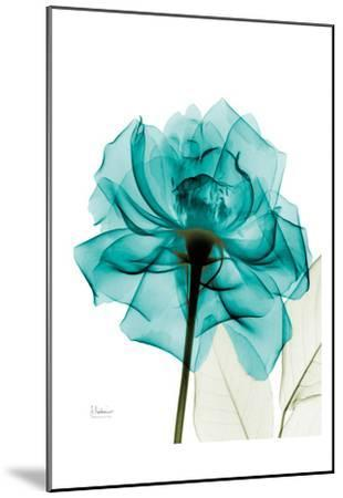 Teal Spirit Rose-Albert Koetsier-Mounted Art Print