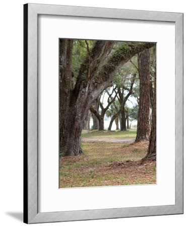 Serenity Park-Sandro De Carvalho-Framed Art Print