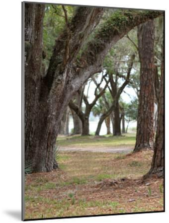 Serenity Park-Sandro De Carvalho-Mounted Art Print