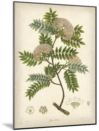 Vintage East Indian Plants VI-Maria Mendez-Mounted Art Print