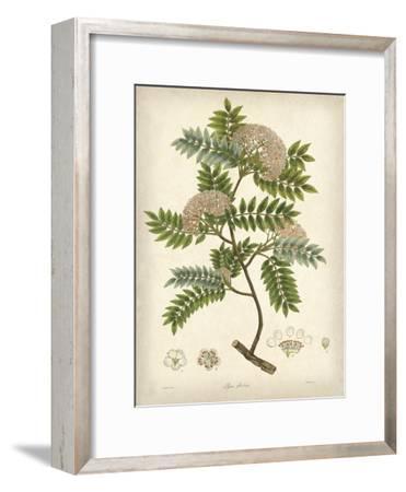 Vintage East Indian Plants VI-Maria Mendez-Framed Art Print
