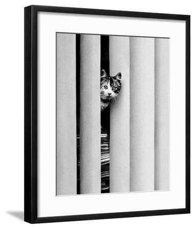 Chat Curieux-Edward Golbin-Framed Art Print