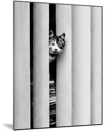 Chat Curieux-Edward Golbin-Mounted Art Print