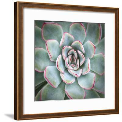 Edged in Red-Jan Bell-Framed Art Print