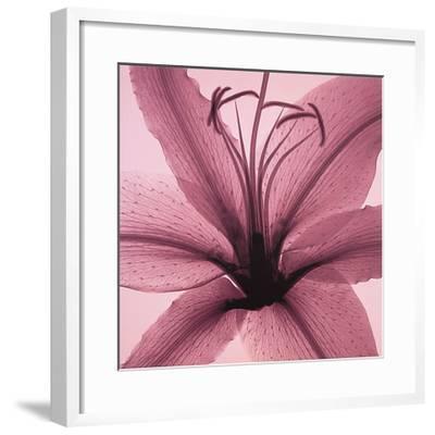 Lily-Steven N^ Meyers-Framed Art Print