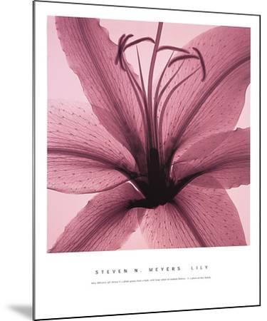Lily-Steven N^ Meyers-Mounted Art Print